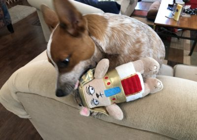 Playing with King Nut from my BarkBox.