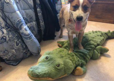 When I killed that gator!